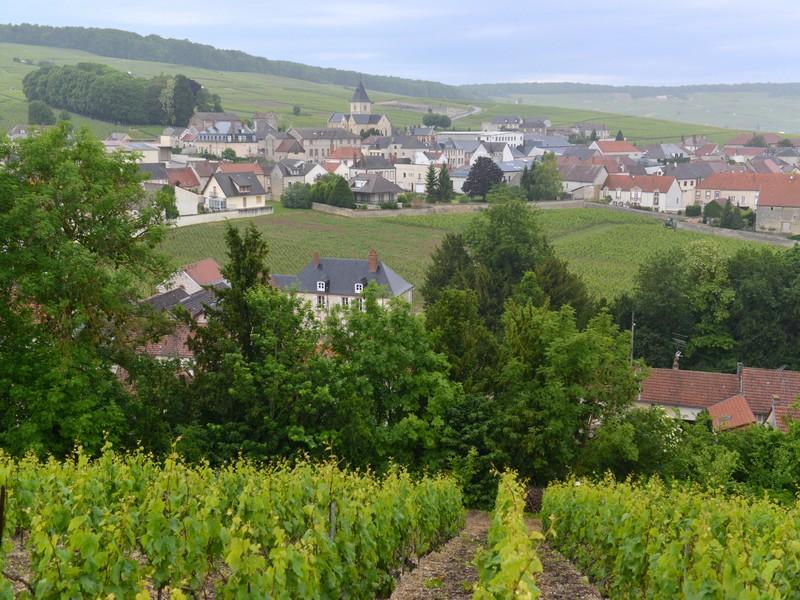 Paysages-du-Mesnil-sur-Oger
