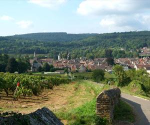 savigny-les-beaune-1604-1-1
