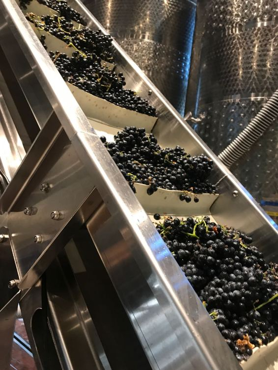 cg grapes conveyer