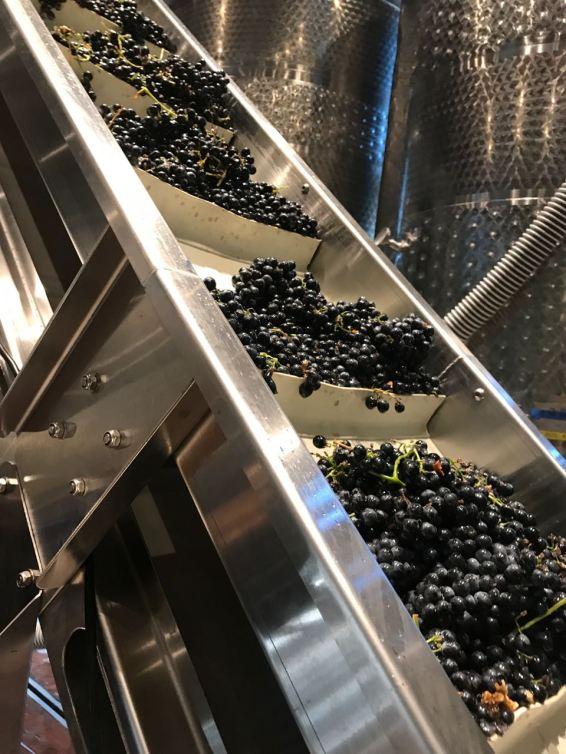 cg grapes conveyer