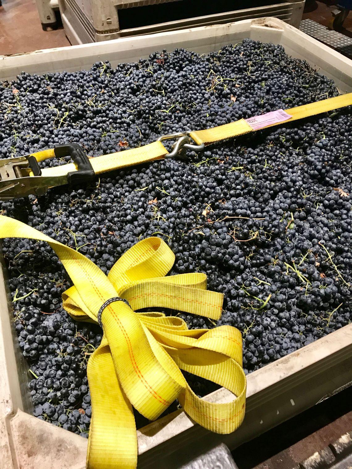 cwbox grapes